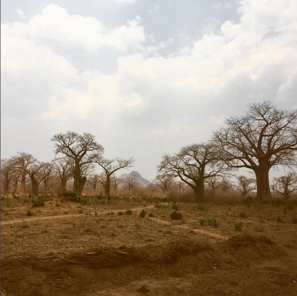 Las raíces del baobab